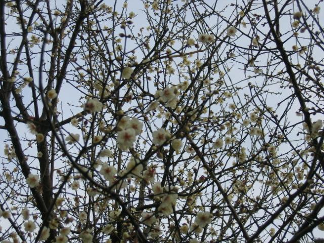 春はもうすぐ_c0034873_20463279.jpg