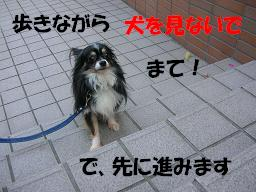 c0004744_22244181.jpg