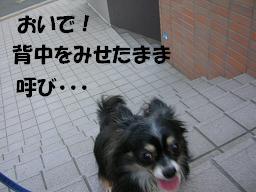 c0004744_2229546.jpg