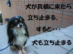 c0004744_2240405.jpg