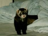 番外編  フェレットから猫への物語3(時々連載)_c0006826_19513131.jpg