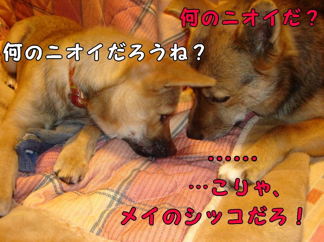 c0031326_1411361.jpg