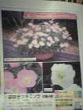 「昼咲き月見草」は、いけないと思う_a0025572_22202766.jpg
