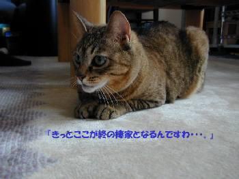 c0023474_14565757.jpg
