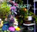 b0066497_22432439.jpg