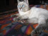 猫の魅力5   眼1_c0006826_7493739.jpg