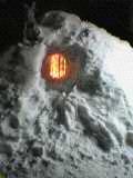雪の中に熱帯魚を見つける・・・の巻_a0025572_1482569.jpg