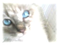猫の魅力5   眼2_c0006826_952764.jpg