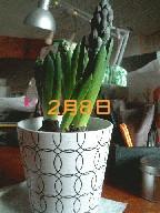 c0021272_1934592.jpg