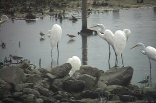 初めての鳥見会_c0047906_1133857.jpg
