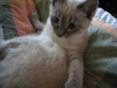 猫あれこれ_c0006826_7103595.jpg