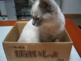 猫の魅力6    ゴロゴロ・・・・_c0006826_7143838.jpg