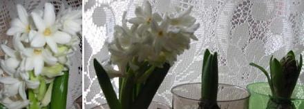 ヒアシンスの花が咲いたよ!_c0052576_1234571.jpg