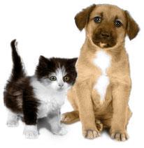 ★犬・猫IQ診断を試してみて U^ェ^U ワン!(=^. .^=)ミャー_a0028694_22251670.jpg
