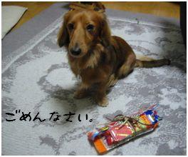 b0044804_201209.jpg