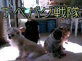 b0038406_0402440.jpg