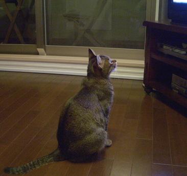 猫は入浴後・・・_a0014810_1175044.jpg