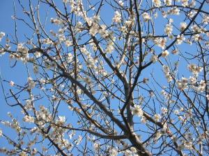 梅の花_c0052576_21133389.jpg