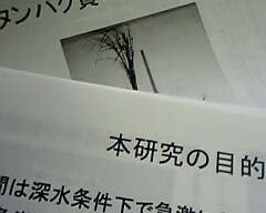 b0035100_17302345.jpg
