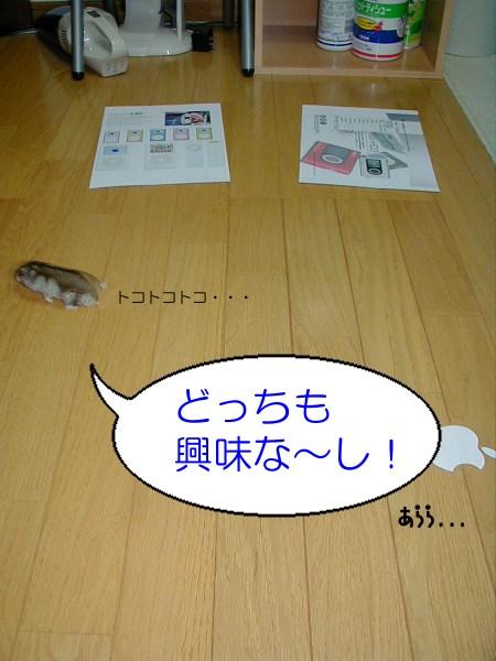 c0039181_015841.jpg