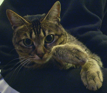 猫はカメラに気づくと_a0014810_1274155.jpg