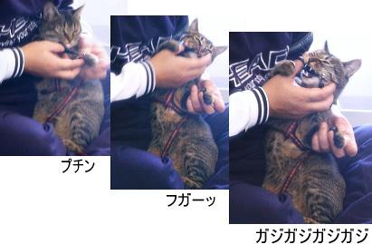猫はカメラに気づくと_a0014810_1275237.jpg