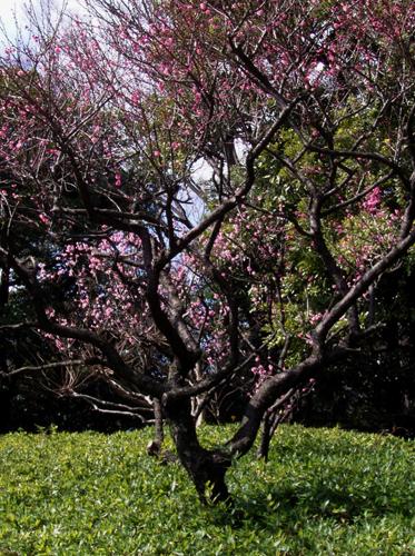 春の兆し。_b0022268_22305960.jpg