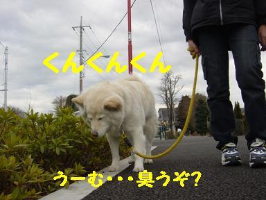 c0021898_1302968.jpg