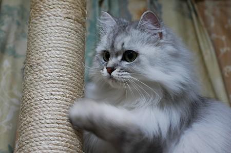 猫の日の過ごし方_a0020021_23241435.jpg