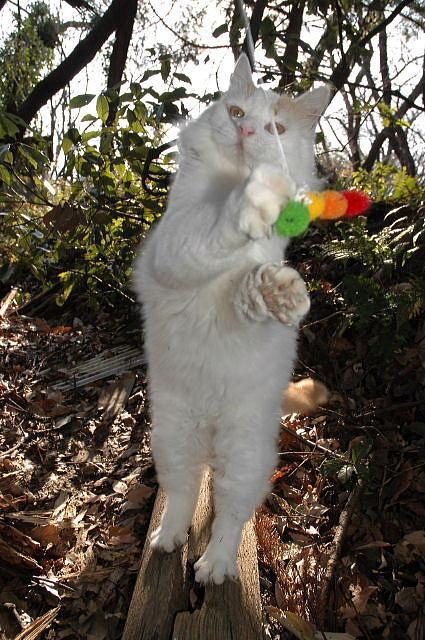 自然に見えるパンチラ総合スレPart.10 改 [無断転載禁止]©bbspink.comYouTube動画>1本 ->画像>5007枚