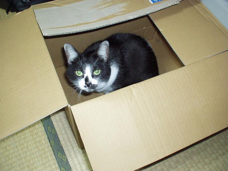 猫の日祭り週間!! 猫が寝込んだアナコンダ!!_a0008523_22355433.jpg