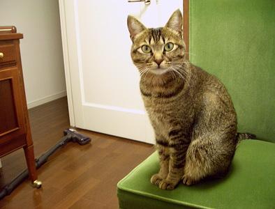 猫は食事に遅れない_a0014810_1228945.jpg