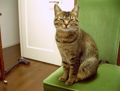 猫は食事に遅れない_a0014810_1415232.jpg