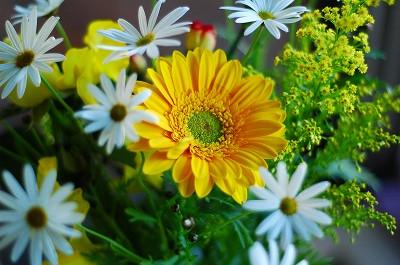 黄色って_a0020021_23452811.jpg