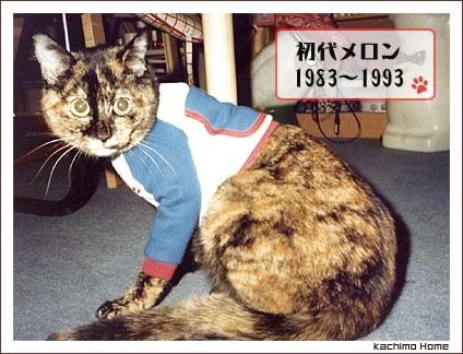 うちの初代猫 長女のメロンさん。_a0028451_14071.jpg