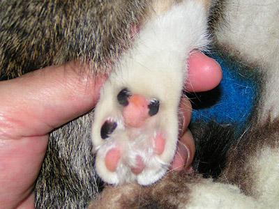 プリンの肉球。耳黒のクマ&顔黒クマ_a0028451_2135213.jpg