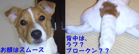 c0011766_17505273.jpg