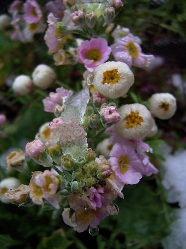 凍花。_b0022268_0224385.jpg