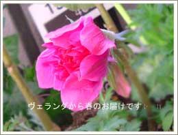 b0026786_0332023.jpg
