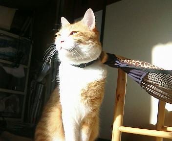 ひだまり猫。_b0019333_22195262.jpg