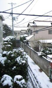 雪の朝_c0052576_178113.jpg