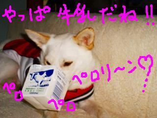 b0006329_222114.jpg