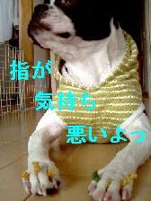 b0056096_19103216.jpg