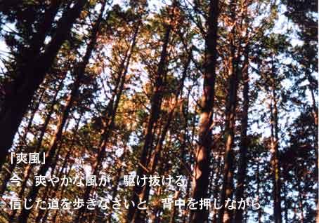 b0044724_1456223.jpg