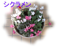 c0041324_22404087.jpg
