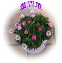 c0041324_2242346.jpg