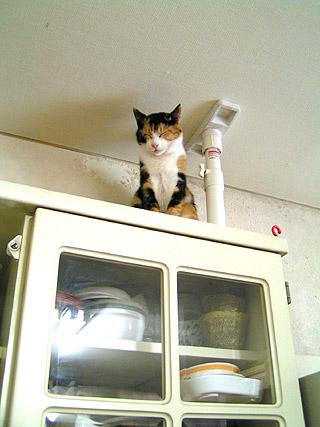 食器棚の上で居眠りするミツマメ_a0028451_159485.jpg