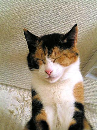 食器棚の上で居眠りするミツマメ_a0028451_1595724.jpg