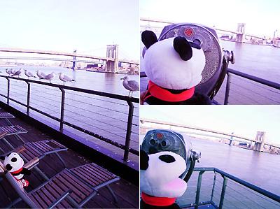 今日のパンダちゃん1_b0007805_915233.jpg