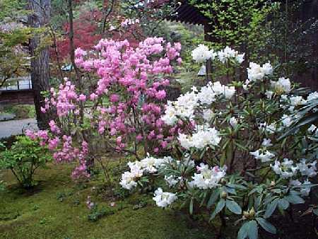鎌倉・白藤の花_c0059854_19164080.jpg